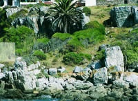 Holiday/Hermanus..South Africa