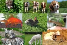 Homeopathy For Animals / 0