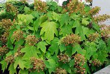 Favorite plants / by Julie Steigerwalt