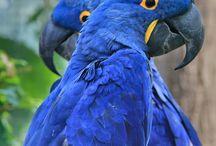 Papegøye og fugler