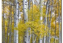 Manzara ve ağaçlar