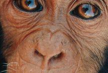 monkey's true