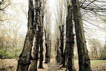Photos - Woods