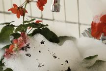 Bathing / This geranium is completely free of associations and stripped of traditions.