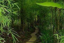 Wonderful Nature