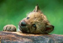 vlk / vlk