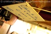 Making ciliegiolo wine with Sergio in Sestri Levante