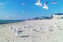 чайки море