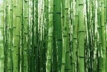 Jungle Design / by Citrine Rain
