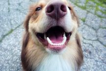 Valuable Pet Information / Informational tid-bits about caring for your beloved pet. Trust us for tips on your pet's health and wellness!