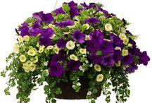 basket combos gardening