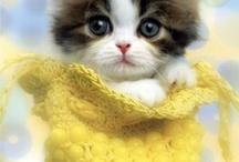 kitties :D / by Amy Grace