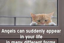 Katzen und Weisheiten