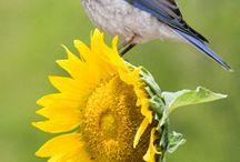 Garden Friends - Birds/Butterflies