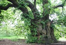 Amazing trees / Amazing old, interesting and beautiful trees.