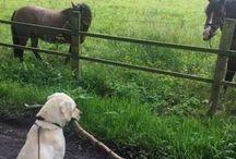 Hunden der vil være en hest❤