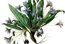 erbe piante