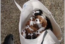 l buy some puppies from the super market 50,90