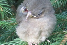 bird with 2 mouths
