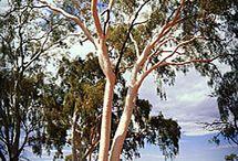 Northern Territory AU