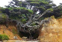Nature . trees