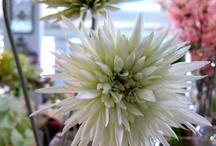 Flores de la tienda / Plastic flowers