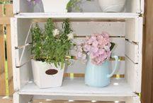 plantas decoracion