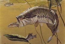Ryby obrázky