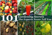 Gardening secrets 101