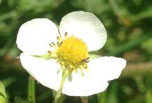 Claudia's garden / foto dei fiori e delle piante del mio giardino