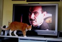 beware of the cat / by Anja Naehkitz