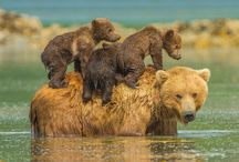 CUBS ON MUM BACK