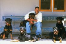 Celebrity Rottweilers