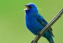 Birds in my back yard / by Marvella Hill
