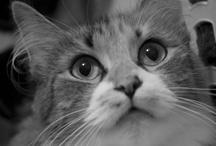 My Purrrrrfect Kitties ;) / by Tisha Scott