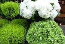 Krukker Have / Krukker kan tilføje så megen skønhed til en have, og også hjælpe med at indsamle vand for at forhindre oversvømmelser.