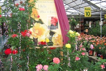 Friday Apr. 18, 4-7 PM,Celebrate Spring at Night of Wine & Roses / Come rain, snow, sleet or hail...