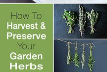 Herbs - to Harvest, to Grow, to Preserve.