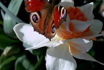 Spring -my garden -jaro