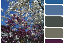 Craft: SCB-Color Schemes-Dark / by Jeanette Schwarz