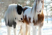 Pferde ❤️