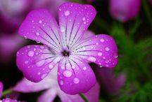 Breathtaking flowers