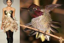 Nature and Fashion