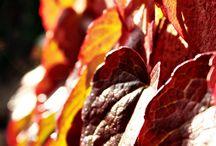 Évszakok: ősz / Fotók , ahogyan én látom