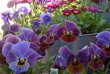 Fleurs des villes et fleurs des champs / Les beaux spécimen de la nature rassemblés ici !