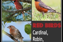 Nature Study- Birds / by Ruthie Sheppard