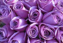 μωβ λουλουδια