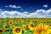 Flowers / by Debbie Kenney Thomas