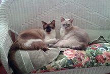 My Cats / Nikko & Mushu / by Carolyn Daley