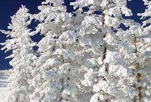 Winterwonderland and Sprinkle of Fall
